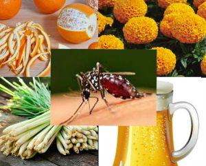 Những cách bạn cần làm để phòng chống muỗi đơn giản hiệu quả
