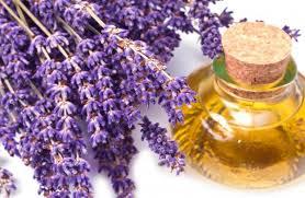 Giải nghĩa các công dụng tuyệt vời của tinh dầu Lavender