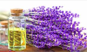 5 mẹo trẻ hóa làn da với tinh dầu lavender