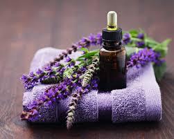 Một số tác dụng của tinh dầu tự nhiên oải hươnggiúp xinh xắn và sức khỏe tốt